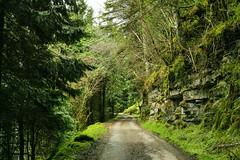 Road in King's Mountains (Phoenix Konstantin) Tags: ireland landscape sigma sligo merrill foveon merill dp2m