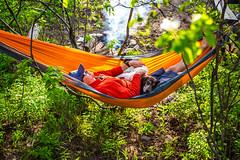 (The Noisy Plume) Tags: summer camp relax birddog hammock snooze rest gsp germanshorthairedpointer