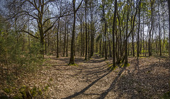 A Forest (Tom Cuppens) Tags: wood panorama nature forest belgium natuur bos meeuwen bois gruitrode oudsberg opglabbeek