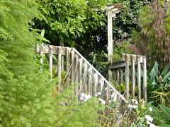My Garden (sallyNZ) Tags: trees green mygarden pergola scavenger19