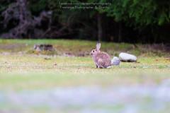 _U6A9806 (Capt_Earth) Tags: new travel newzealand beautiful canon landscape photo nice rainbow photographer view famous canterbury zealand nz motorhome lightroom mountcook 70d 5dmarkiii