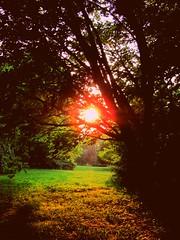 Rutgers Gardens Sunset - East Brunswick, NJ (RSH3339) Tags: sunset sun tree grass newjersey rutgersgardens
