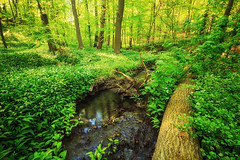 Brlauch River (Gruenewiese86) Tags: nature canon landscape natur grn tamron landschaft wald harz 6d brlauch 1530 waldlandschaft