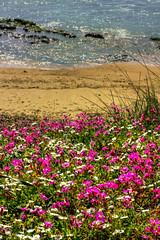 IMG_9838 - Kopie (2)And2more_tonemapped-1 (Andre56154) Tags: ocean italien flowers italy sun beach water strand coast sand meer wasser pflanzen blumen sicily sonne kste gegenlicht blten sizilien ozean