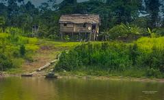 Amazonas (juan Mario Cuellar) Tags: atardecer amazonas yavari
