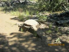 Bike obstsacle on the Los Gatos Trail - Mt. Laguna  6-26-16 (Bob_ Perry) Tags: laguna mtlaguna mountlaguna lasgatos losgatos chicoravine lmva lmra lagunamountainrecreation clevelandnationalforest lagunamedow