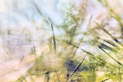 Multiple Nature 337 (pni) Tags: sea sky blur suomi finland helsinki multipleexposure needle helsingfors tripleexposure multiexposure seurasaari skrubu pni flisn pekkanikrus