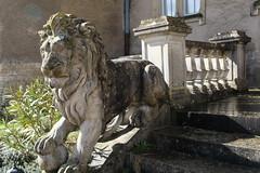 Entre aux lions (volcan642012) Tags: castle stone lion valley loire 16thcentury