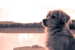 Maosin! (Eliecer Gallegos) Tags: portrait dog colors mydog doglover