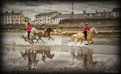 Enjoyment (D.k.o.w) Tags: horses lighthouse seascape canon landscape harbour 7d northernireland splash seafront trot gallop riders mkii donaghadee irishsea northdown