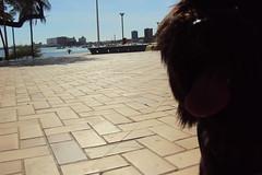 Urso na Beira Mar em 2010 (Possidonio) Tags: urso
