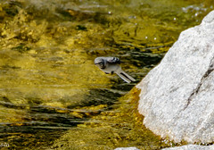 Who needs Wings?? (rogerbo69) Tags: animal wildlife natur vogel byrd