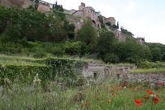 Necropoli di Orvieto_20