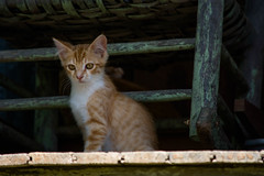 The Thinker, Kitty Style (bigwog84) Tags: cat gato gatinho kitty