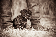 Stand by me-1 (d3max) Tags: portrait pets cute dogs canon puppy puppies canine mansbestfriend dogsatplay 5dmk3 martinhillphotography