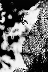 Neltume (bisonte invencible) Tags: bn bnw blancoynegro blackandwhite film 35mm plat texture neltume chile biancoenero blancetnoir kodak canon