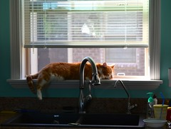 Nap Time (linda_lou2) Tags: sleeping window cat still buddy napping themeno61 116picturesin2016