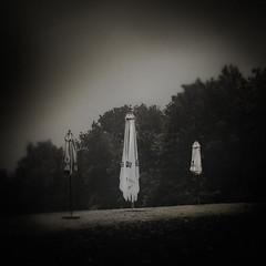 Three parasols, Begium 2016 (janbeernaert) Tags: trees bw digital landscape belgium zwartwit parasols ilovephotography blackandwhitefineartphotography olympusomdem5 janbeernaert