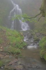 Parque natural de #Gorbeia #Orozko #DePaseoConLarri #Flickr -094 (Jose Asensio Larrinaga (Larri) Larri1276) Tags: 2016 parquenatural gorbeia naturaleza bizkaia orozko euskalherria basquecountry