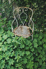 (enora*) Tags: leaves leaf chair chaise feuilles feuille