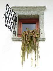 Hanging garden (Claire Wroe) Tags: wood pink cactus white house lake plant flower building green home window glass metal wall succulent wire slovenia ledge frame bled