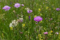 IMG_0769-257 (Martin1104) Tags: fotografie natuur bergen landschap vlinders yagodina snp bulgarije natuurfotografie natuurreis