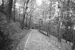 Minolta Hi-Matic G - Path with Lamps (Kojotisko) Tags: bw brno creativecommons czechrepublic vx400 konicamonochromevx400 minoltahimaticg konicamonochrome