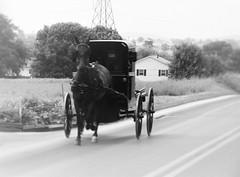 IMG_3493 (joyannmadd) Tags: amish farms auction farmersmarket lancaster pa nature outdoors field depth travel horse buggy transportation road work wagon pennsylvania lifestyle depthoffield run hoof wheel