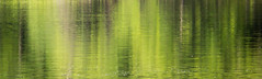 Summer Reflection (Pauline Brock) Tags: summer abstract reflection green nature water river foliage waterabstract greenreflection abstractreflection