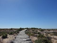 (Ira H.) Tags: portugal faro riaformosa algave ilhadeserta