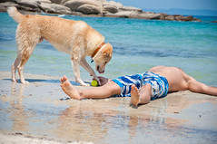 And the winner is... (Kostas Niarchos Photography) Tags: sea dog game beach dogs ball fun sand vourvourou
