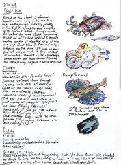 April-May 2013: Caribbean Adventure - Underwater (apple-pine) Tags: saba saintmartin underwater sketching scuba adventure scubadiving caribbean saintkitts 2013 caribbeanexplorer sketchingandscubadiving sketchingwhilescubadiving