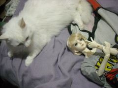 DSCN75 070 (applecandy spica) Tags: leica white youth cat furry kitten chat doll soft kitty fluffy sd dk bjd katze fatcat chubby weiss gatto bianco blanc kittie ktzchen micio chaton gattino balljointeddoll weis dika soffice peloso morbido gattone micetto beautywhite gattochiatto jointedhands dikadoll