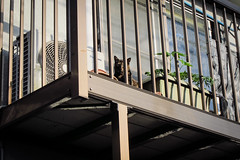 Today's Cat@2013-05-13 (masatsu) Tags: cat canon catspotting thebiggestgroupwithonlycats powershots95