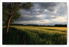 Abendlandschaft II (Rolf Pahnhenrich) Tags: rolfpahnhenrich wiesenfelder canoneos5dmarkii wolken wolkenhimmel abendhimmel landschaft landscape himmel feld wiesen felder abendstimmung wolkenlandschaft sonnenuntergang gras baum
