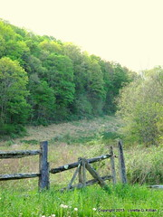 Slate Belt Farms (Peachhead (1,000,000 views!)) Tags: wood old abandoned rural fence wooden gate pennsylvania farm farmland pa pasture forgotten weathered lehighvalley countryroad forlorn nepa unused northamptoncounty slatebelt lowermtbetheltownship garrroad