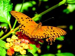 mari (jlbravin) Tags: mariposa flor coronda colores canon sx50 pjaro blancoynegro silueta