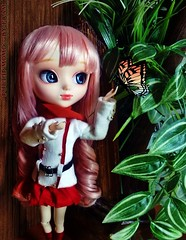 Pullip Momo - Hakaze / Zetsuen no Tempest (främ) Tags: momo pullip hakaze zetsuen