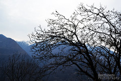 Wind (Roby-21) Tags: panorama beautiful schweiz switzerland tessin ticino swiss castione arbedo sopraceneri