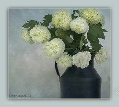 untitled-03408.jpg (bonnie5378) Tags: old stilllife can hydrangea qualitypixels may2013 creativephotocafe flowerthequietbeauty hydrangiabluecan