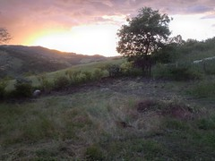 365 day 68, May 24 (Marco40134) Tags: trees sunset plants countryside campagna photostream emiliaromagna sillaro bellisola