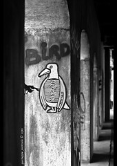 bird (giuseppe pascale) Tags: road street light urban bw white canada black bird architecture underpass concrete grey graffiti paint pattern arch montreal tag arcade line nikkor50f18d gpfoto nikond300 giuseppepascale giuseppepascalephotography