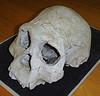 homo_georgicus_skull_cranium_d2700 (Sapiens - Scientific discoveries) Tags: man history archaeology nature handy skeleton skull spring natural science bones homo hobbit discovery remains humans fossils workman proto neanderthal taung erectus sapiens australopithecus floresiensis hominini paranthopus