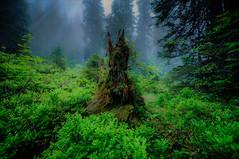 once upon a time... Explored #28 (Swissrock) Tags: wood green fog forest landscape switzerland nikon nebel onceuponatime grn wald hdr farn d700 pragelpass