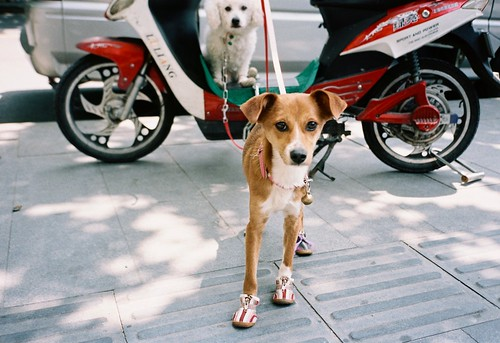 Two dogs and a motorcyle - 01