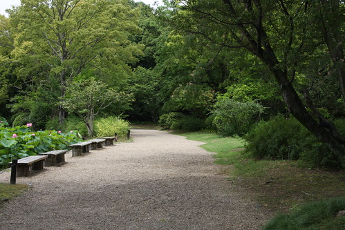 蓮池のある散歩道