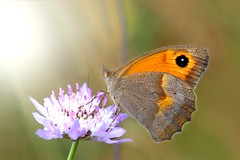 Butterfly (Ignazio Corda) Tags: butterfly beautifulmonsters photo©byigcor