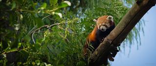 Firefox ;o)