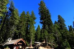 USA-Parque Nacional de las Secuoyas-California 01 (Rafael Gomez - http://micamara.es) Tags: california park las parque usa de nevada sierra national nacional sequoia visalia estados eeuu unidos secuoyas