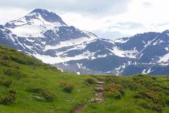 prairie de rhododendron (luka116) Tags: berg montagne alpes schweiz switzerland montana suisse swiss relief prairie svizzera paysage juillet montagna moutain wallis valais montagnes simplon sommet paturage 2013